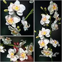 Orchid moth