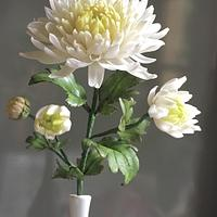 Japanese Chrysanthemum