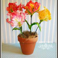 Large Tulips