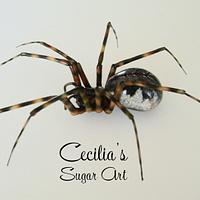 Spring Hammock Spider (Neriene montana)