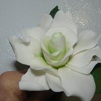 sugar flowers by gail