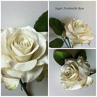Sugar Avalanche Rose  by Anne Cutajar-Wagner