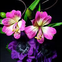 Alstroemeria flower