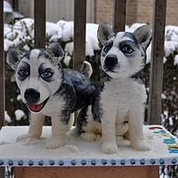 Puppies for my son
