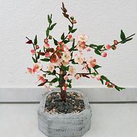 Little Apple Blossom Tree