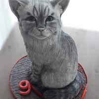 3D Cat cake