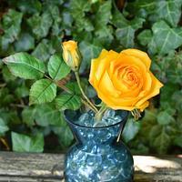 My favorite yellow roses