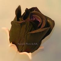 Moody black rose