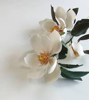 Magnolia  - Cake by Natalia Casaballe