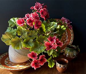 geranium))  - Cake by  Alena Ujshag