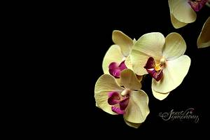phalaenopsis/Moth Orchids - Cake by Sweet Symphony
