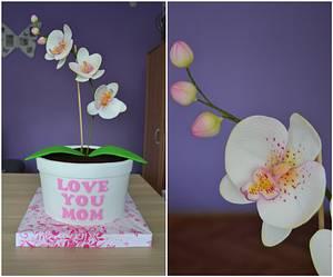 Orchid pot cake - Cake by Zaklina