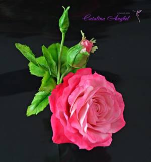 Freeformed Pink sugar Rose- Garden Beauty - Cake by Catalina Anghel azúcar'arte
