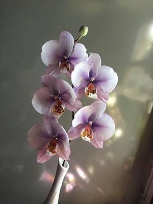 Phalaenopsis orchid - Cake by Piro Maria Cristina