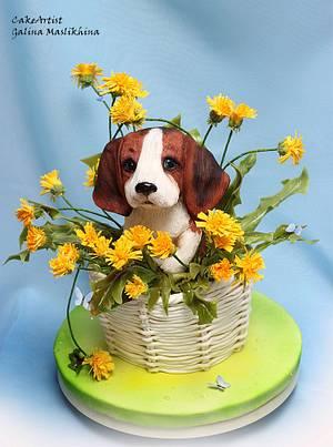 3D cake puppy Beagle in the basket of dandelions - Cake by Galina Maslikhina