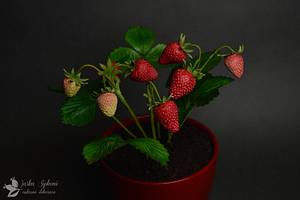 Strawberries - Cake by JarkaSipkova