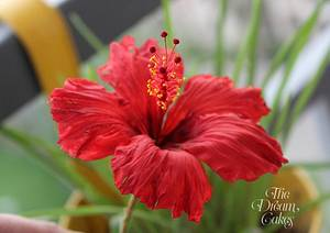 Red Sugar Hibiscus - Cake by Ashwini Sarabhai