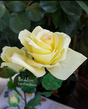 Yellow rose - Cake by Asya Vencheva