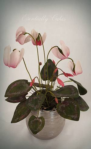Cyclamen - Cake by Essentially Cakes