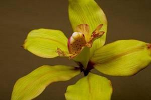 Edible sugar orchid  - Cake by JenStirk