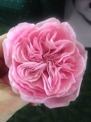 English Rose Class - Cake by Lisa Templeton