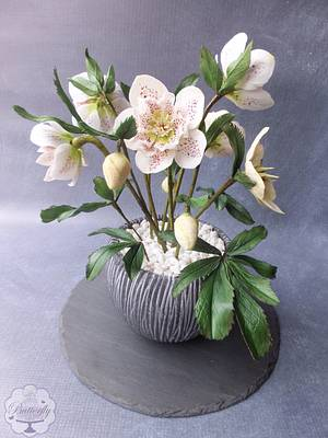 Hellebores - Cake International Silver Award - Cake by Butterfly Cakes and Bakes