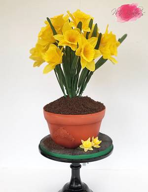 Pot of Daffodils - Cake by Mr Baker's Cakes