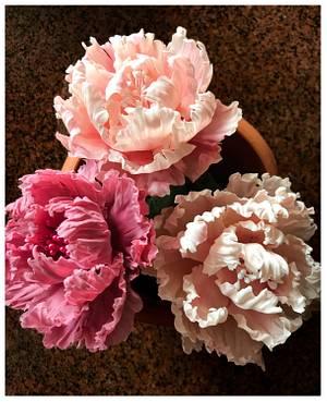 Flower paste Peonies  - Cake by Homebaker