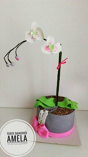 orchid cake - Cake by Torte Amela