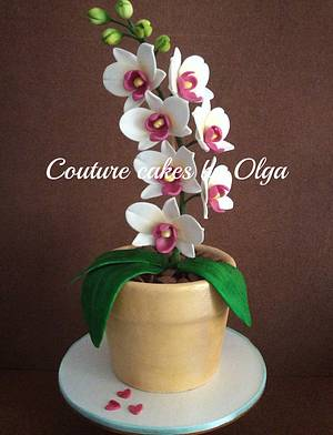 Orchids in a flower pot - Cake by Couture cakes by Olga