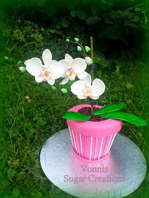 Phalaenopsis Orchid - Cake by Vonnis Sugar Creations