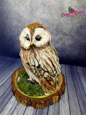 Owl cake - Cake by crazycakes