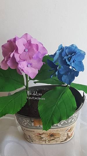 Hydrangea  - Cake by Asya Vencheva