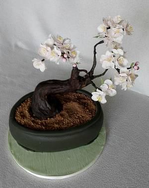 Bonsai - Cake by Anka