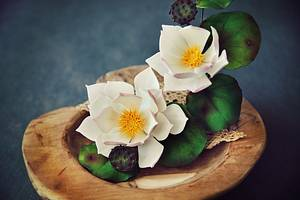 Waterlily - Cake by Sladky svet