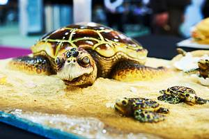 Bella the Turtle - Best in show - Manchester 2013 - Cake by Vicki's Incredible Edibles