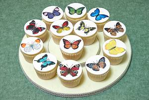 Old Curiosity Collaboration - butterflies - Cake by The Chain Lane Cake Co.