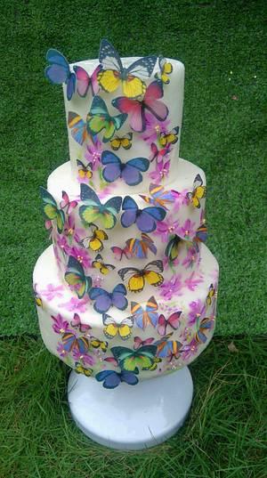 Butterflies  - Cake by Daniel Guiriba