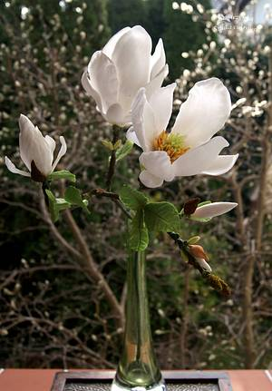 Magnolia - Cake by Katarzynka