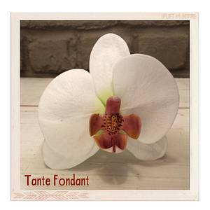 First gumpaste flower ever (moth orchid) - Cake by Tante Fondant