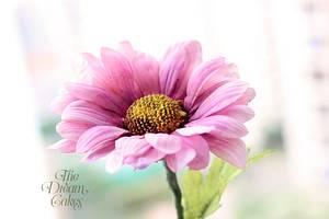 Pink Sugar Daisy  - Cake by Ashwini Sarabhai